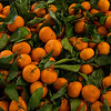Tangerines at Casa de Fruta.