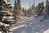 Trail in the deep snow in Rocky Mountain National Park. Snowshoes recommended!