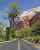 Zion National Park in Spring, Utah. Apr 2008