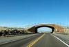 Animal Overpass in Nevada on US93