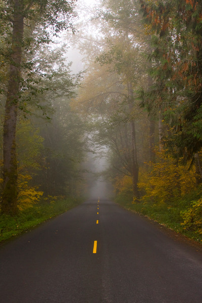 Highway 131 from Randle Washington to Spirit Lake in Fall with fog and towering forest trees. Morning of October 20, 2009