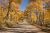 Relaxing road scene with golden Aspen trees in Fall along Red Rock Road in Idaho, near the Montana border. Sep 27, 2008