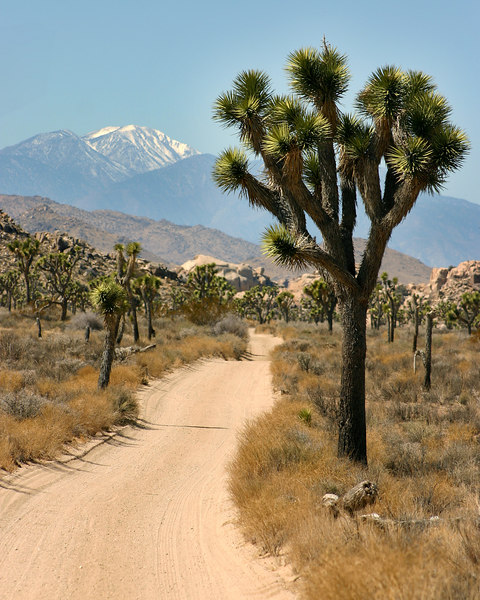 Looking down a dirt road in Joshua Tree National Park (Queen's Valley road) to snow-capped San Gorgonio Mountain in Southern California.