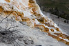 Mammoth Terrace, Yellowstone National Park