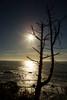 Tree, Sun and Ocean.