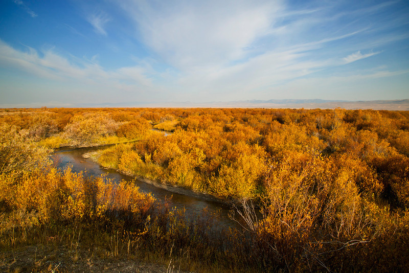 Red Rock Creek along Elk Lake Road with fall-colored Willows, Red Rock National Wildlife Refuge. Sep 2012. Montana.