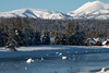 Trumpeter Swans on Henry's Fork of the Snake River
