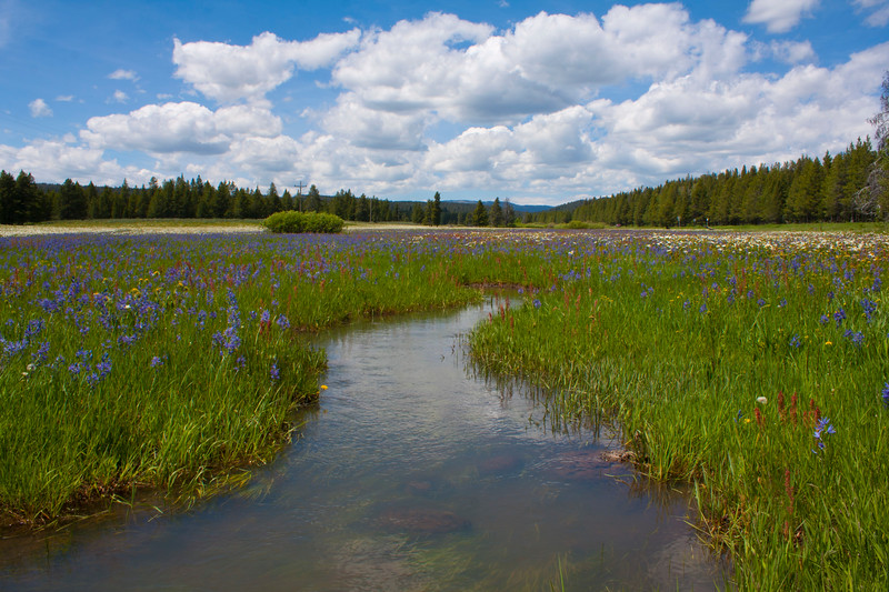 Bootjack Creek and wildflowers