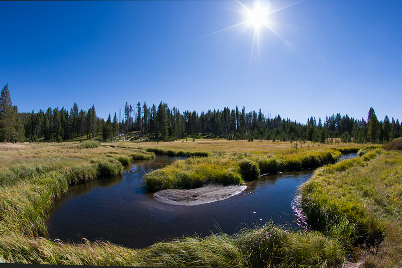 Near the headwaters of the Gibbon River in Yellowstone