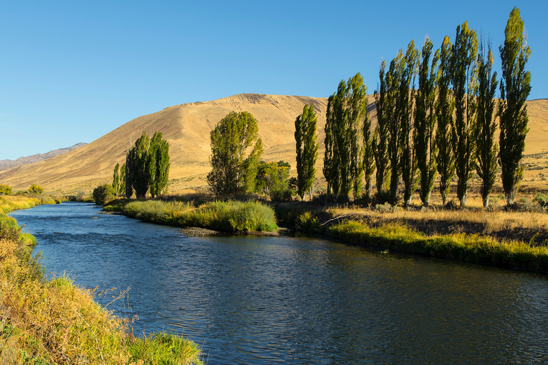 Trees along the Malheur River in Oregon