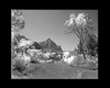 Virgin River in Zion National Park with a grayscale infrared hue.