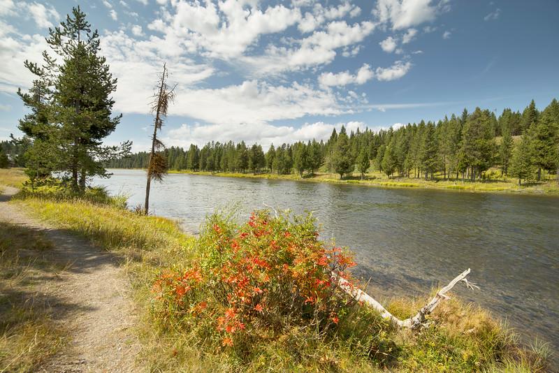 Henry's Fork of the Snake River