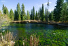 Deschutes River and Algae