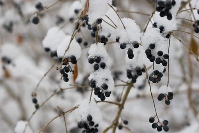 Dingle Berries?