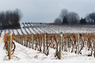 Michigan Vineyard in Winter