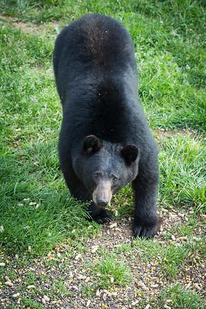 RME_Bears_72