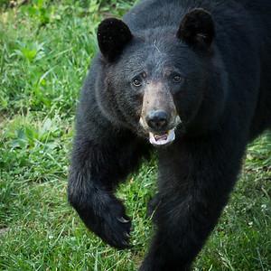 RME_Bears_56