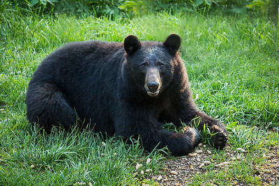 RME_Bears_84