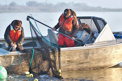 Looking for Delta Smelt-February