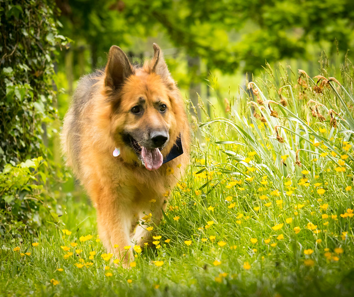 Dog Photographer Bristol - 31 Breeds in 31 Days