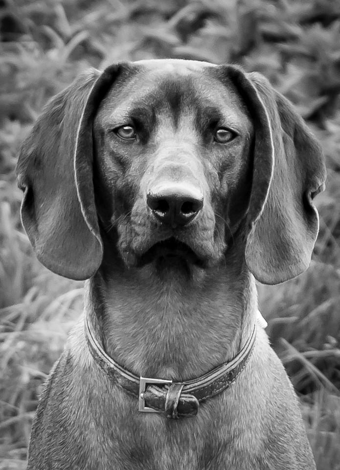 Dog Photographer Bristol - 31 Breeds in 31 Days