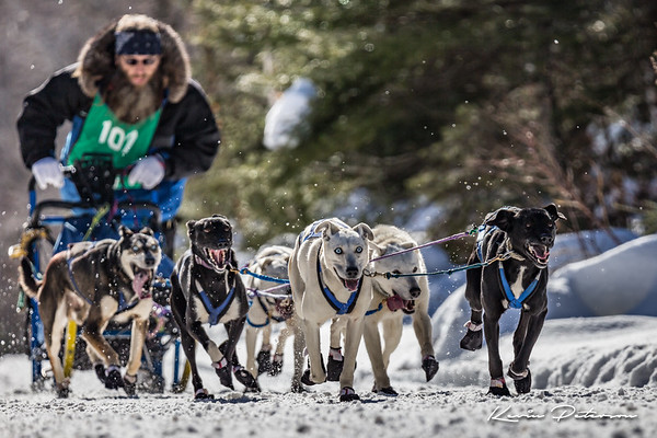 John Beargrease Sled Dog Marathon 2016