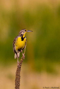Meadowlark at Davidson Mesa