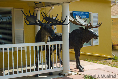 Mooses on Main Street