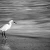 Still Bird