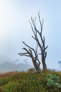 Mt Hotham Misty Morning 6473