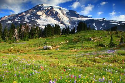 Mount Rainier glaciers glow over a meadow