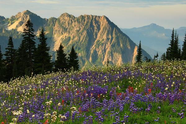 Tatoosh Range and alpine wildflowers from Mount Rainier