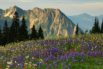 Tatoosh Range and alpine wildflowers from Mount Rainier