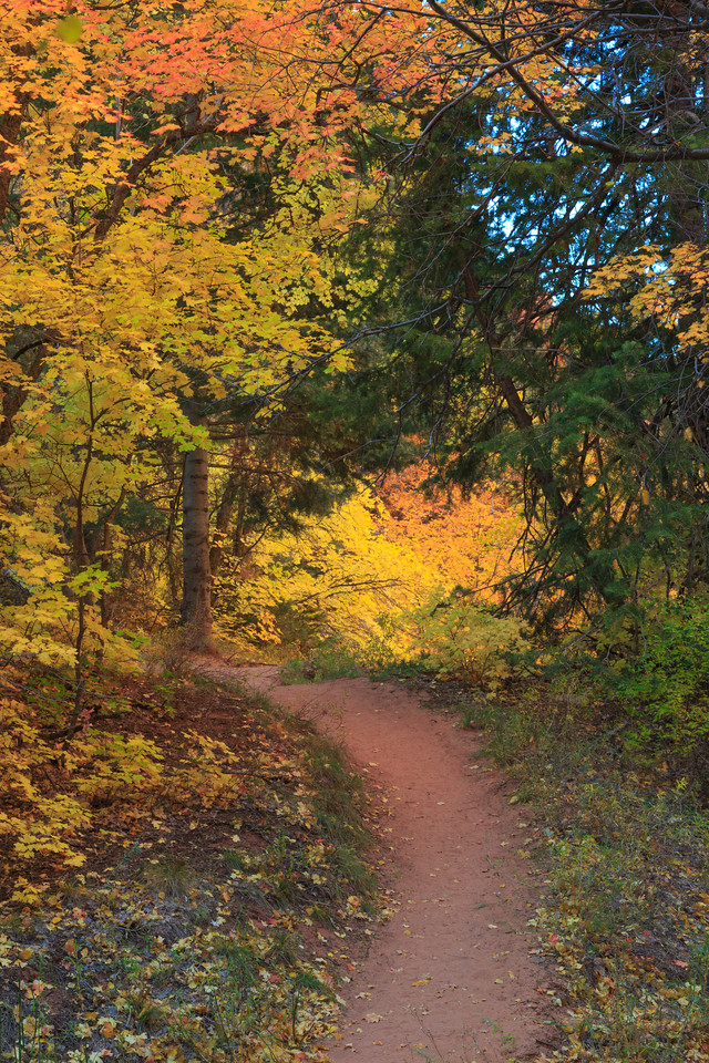 Fall color on a woodland path
