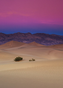 Mesquite Dunes - Pink Sunset
