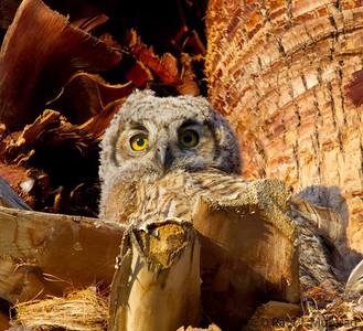 Owlet Portraits