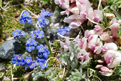 Rocky Mountain Tundra Garden