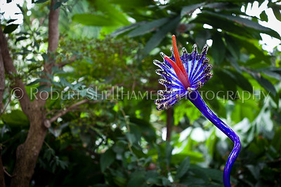 Chihuly Flower
