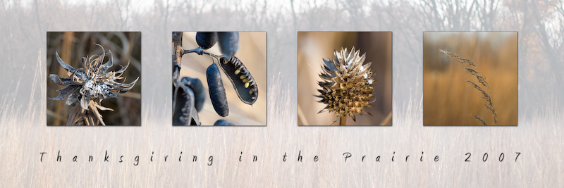 Open_Prairie Montage_Rob Shellhamer