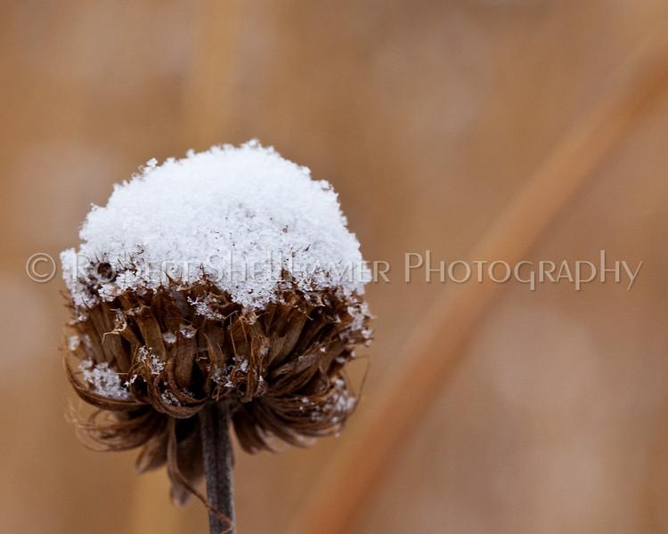 Prairie Under Snow
