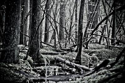Forsaith Forest