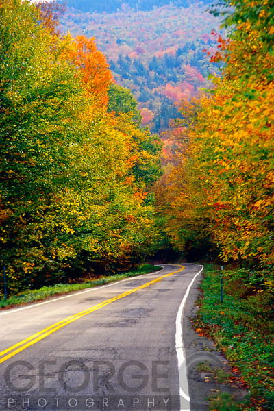 Road In the Autumn Forest, White Mountains, New Hampshire