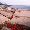 Coastline with Granite Rocks,  Acadia Nat'l Park, Maine