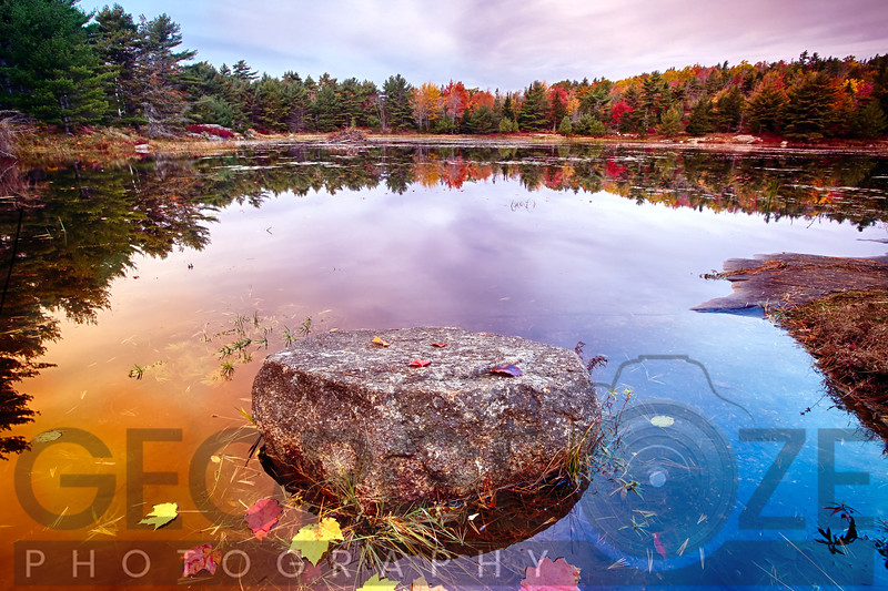 Rock with Fallen Leaves in a Pond, Acadia National Park, Mt Desert Island, Maine