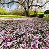 Magnolia Flower Carpet and Tree