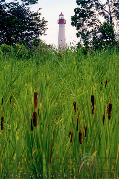 Vertical View of the Cape May Lighthouse Through a  Marsh, Cape May, New Jersey