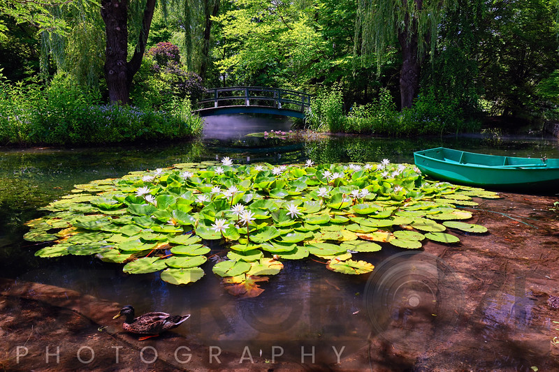 Pond with Water Lilies and a Footbridge