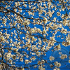 Flowering Tree Branches Against Blue Sky