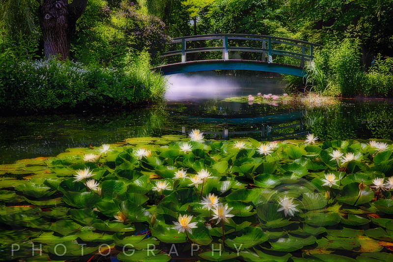 Lily Pond with a Footbridge