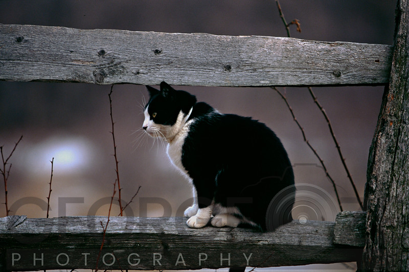 A Cat Sitting on a Wooden Fence